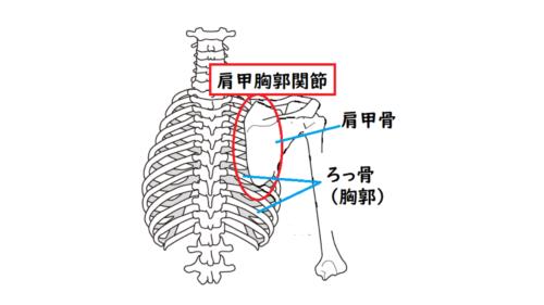 肩甲胸郭関節のイラスト