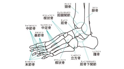 足関節の画像
